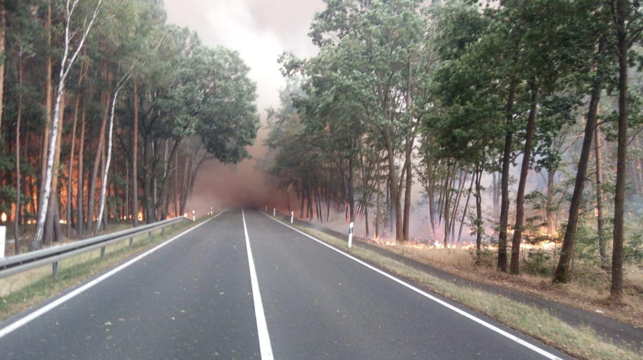 Kompetenzen bündeln gegen Waldbrandgefahren